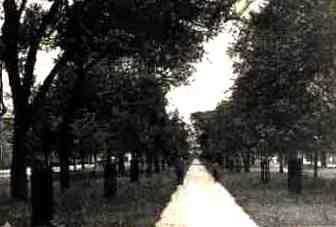 claiborneOakTrees